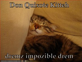 Don Quixote Kitteh  dremz impozible drem