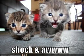shock & awwww
