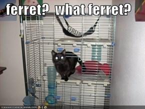 ferret?  what ferret?