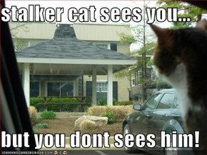 stalker cat sees you...  but you dont sees him!
