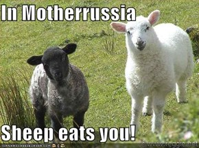 In Motherrussia  Sheep eats you!
