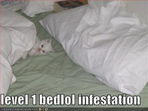 level 1 bedlol infestation