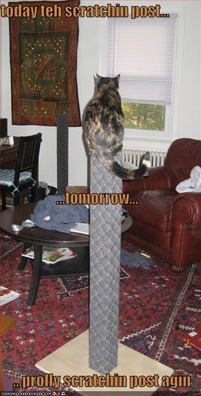 today teh scratchin post... ...tomorrow... ...prolly scratchin post agin
