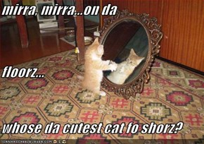 mirra, mirra...on da floorz... whose da cutest cat fo shorz?