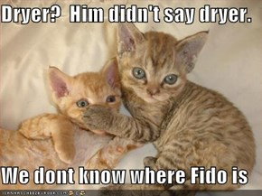 Dryer?  Him didn't say dryer.  We dont know where Fido is