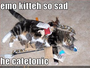 emo kitteh so sad  he catetonic