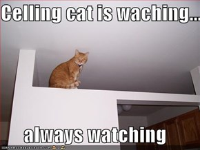 Celling cat is waching...  always watching