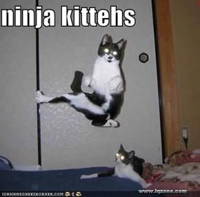 ninja kittehs