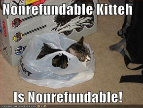 Nonrefundable Kitteh  Is Nonrefundable!