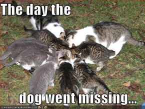The day the   dog went missing...