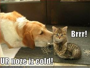 Brrr! UR noze iz cold!