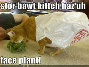 stor bawt kitteh haz uh  face plant!
