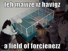 teh mawze iz havigz  a field of forcienezz