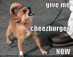 give me cheezburger NOW