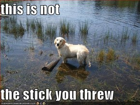 this is not  the stick you threw