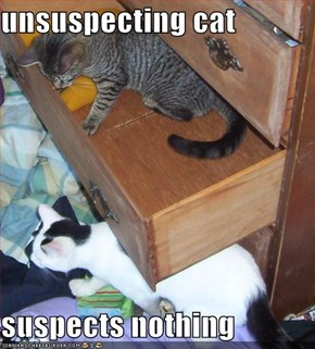 unsuspecting cat  suspects nothing