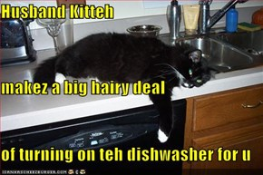 Husband Kitteh makez a big hairy deal of turning on teh dishwasher for u