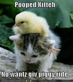 Pooped Kitteh  No wantz giv piggy ride