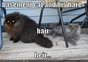 basement cat and his hare hair heir...