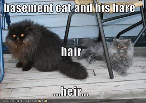 basement cat and his hare hair ...heir...