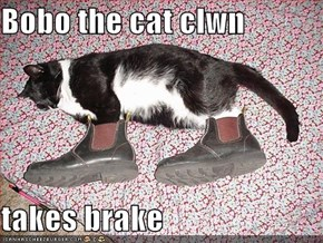 Bobo the cat clwn   takes brake