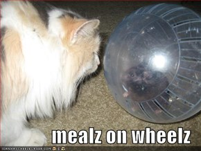 mealz on wheelz