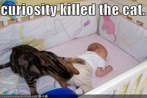 curiosity killed the cat.