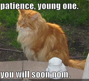 patience, young one.  you will soon nom.