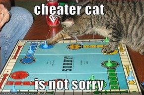 cheater cat  is not sorry