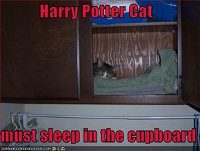 Harry Potter Cat  must sleep in the cupboard