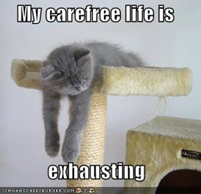 My carefree life is   exhausting