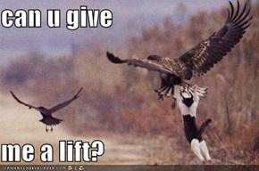 can u give   me a lift?
