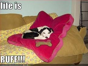 life is  RUFF!!!