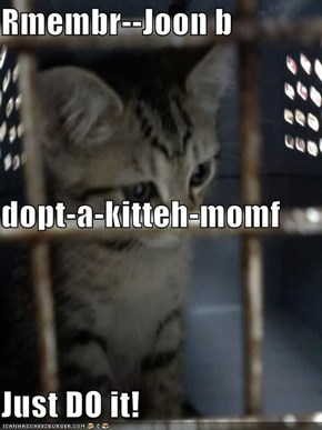 Rmembr--Joon b dopt-a-kitteh-momf Just DO it!