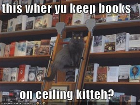this wher yu keep books  on ceiling kitteh?