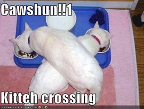 Cawshun!!1  Kitteh crossing