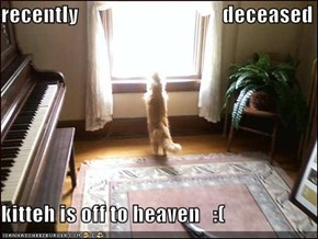 recently                                  deceased  kitteh is off to heaven   :(