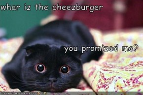 whar iz the cheezburger you promized me?