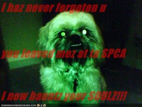 I haz never forgoten u you leaved mez at ta SPCA I now hauntz your SOULZ!!!