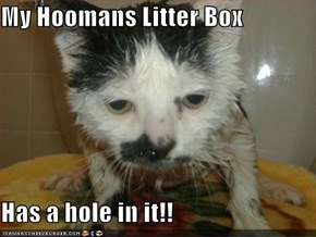 My Hoomans Litter Box  Has a hole in it!!