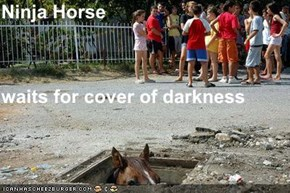 Ninja Horse waits for cover of darkness