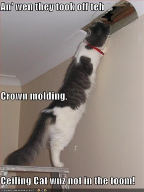 An' wen they took off teh  Crown molding, Ceiling Cat wuz not in the toom!