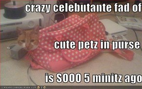 crazy celebutante fad of                          cute petz in purse                     is SOOO 5 minitz ago