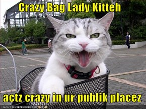 Crazy Bag Lady Kitteh   actz crazy in ur publik placez