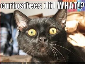 curiositees did WHAT!?!?!