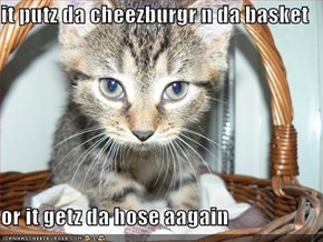 it putz da cheezburgr n da basket  or it getz da hose aagain