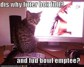 dis why litter box full?  and fud bowl emptee?
