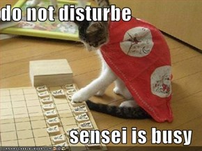 do not disturbe  sensei is busy