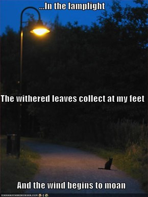 ...In the lamplight   The withered leaves collect at my feet And the wind begins to moan