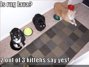 Is rug lava?  2 out of 3 kittehs say yes!